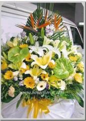 F105 天堂鳥,綠掌,桔梗,太陽花